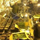 بالصور.. الامن الوقائي يضبط مشتل لزراعة المخدرات غرب رام الله والبيرة
