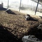 صور وفيديو.. الجنيدي: 6 مسلحين مجهولين هاجموا مزرعتنا في الخليل