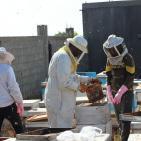 موسم جني العسل في غزة بعد العدوان الإسرائيلي