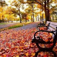 غدا أول أيام فصل الخريف