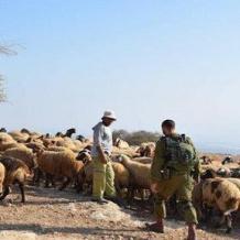 جيش الاحتلال يسرق 100 رأس ماعز جنوب لبنان