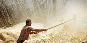 مصر: احتياطيات القمح تكفي حتى الخامس من أبريل 2018
