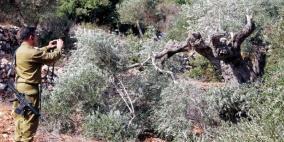 لشق طريق استيطاني.. الاحتلال يعتزم قلع مئات الاشجار قرب قلقيلية