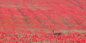 اجمل صور الطبيعة والحيوان في العالم