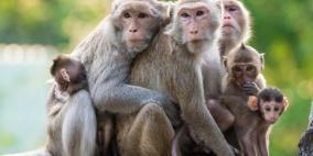 """قصة مثل:""""القرد بعين أمه غزال"""""""