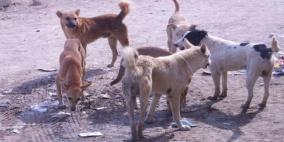 14 إصابة بداء الكلب خلال أسبوعين و 74 حالة في 2017