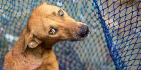 الصحة تحذر المواطنين من عضات الكلاب وتؤكد عدم وجود إصابات بداء الكلب