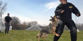 من هم الأكثر عرضة لهجوم الكلاب؟