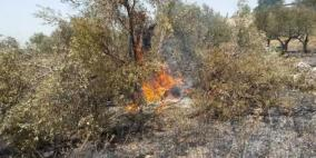 قوات الاحتلال تحرق مزروعات في سبسطية