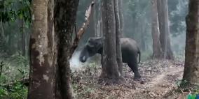 """فيديو الفيل """"المدخن"""" في الهند يحيّر خبراء الحياة البرية"""