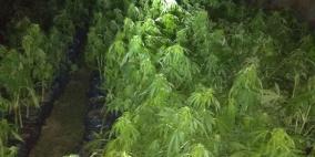 شرطة طولكرم تضبط مشتلا للمخدرات