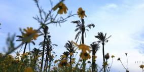 حالة الطقس: أجواء ربيعية اليوم ومنخفض غدا