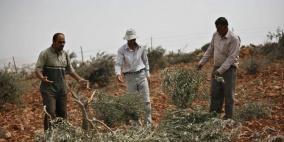 مستوطنون يقطعون أشجار ويخطون شعارت عنصرية جنوب نابلس