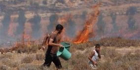 مستوطنون يحرقون أراض واسعة مزروعة بالزيتون في بورين