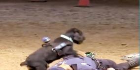 فيديو:  كلب يقوم بالإنعاش القلبي لشرطي