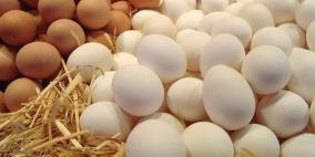 الزراعة: البيض غير مصاب ببكتيريا السالمونيلا