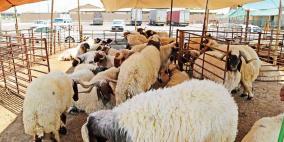 وزارة الزراعة تعلن أسعار الأضاحي في الضفة