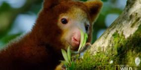 العثور على حيوان منقرض في إندونيسيا