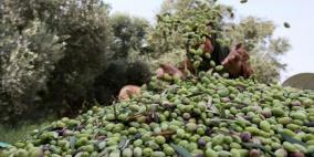 الاحتلال يمنع المزارعين من قطف الزيتون