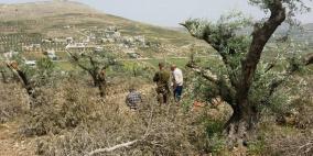 مستوطنون يقطعون 20 شجرة زيتون في المغير