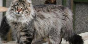 قطط جائعة تلتهم جثة مربيها في مصر