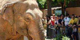 نفوق الفيل الأكثر حزناً في العالم