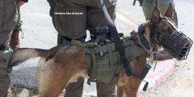لليوم الثالث.. الاحتلال يواصل مطاردة منفذ عملية سلفيت