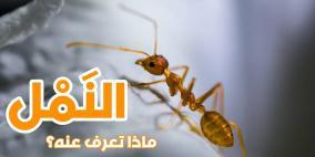 النمل..ماذا تعرفون عنه؟