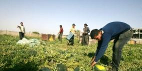 93 مليون شيقل لتعزيز صمود المزارعين