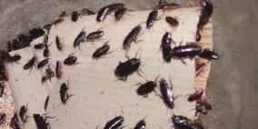 انتشار الحشرات يضاعف معاناة الأسرى في سجن النقب