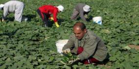الاتحاد الأوروبي يدعم مزارعي غزة بمبلغ 3.7 مليون يورو
