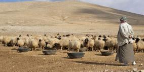 المرصد لحكومة اشتية: واردات الأعلاف لوحدها 2 مليار شيكل في 3 سنوات