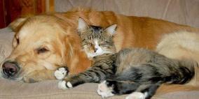 """""""الصحة"""": خبر إصابة القطط والكلاب بأمراض خطيرة إشاعة لا أساس لها"""