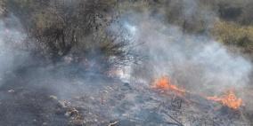 حريق يلتهم أكثر من 600 شجرة زيتون جنوب جنين