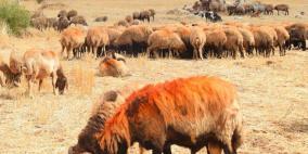 مرصد السياسات: صغار المزارعين أساس تنمية قطاع الألبان والأجبان