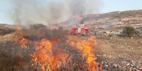 مستوطنون يحرقون مئات أشجار الزيتون في بورين جنوب نابلس