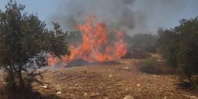 حريق يلتهم 300 شجرة زيتون قرب قرية الطيبة غرب جنين