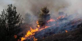 اخماد حريق التهم 120 شجرة زيتون في بلدة عرابة جنوب جنين