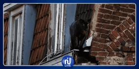 نمر أسود يتجول على أسطح المنازل