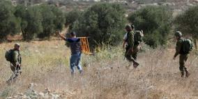 مستوطنون يسرقون ثمار الزيتون من بلدة بورين جنوب نابلس