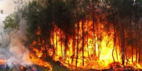 ارتفاع حصيلة قتلى حرائق الغابات في استراليا