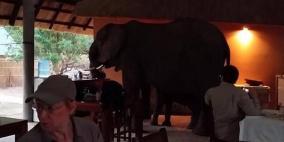 """ضيوف """"غير مرغوب بهم"""".. أفيال تقتحم مطعما وترعب زبائنه"""