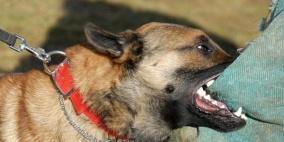 كلاب شرسة تأكل رجلاً حياً في اسبانيا