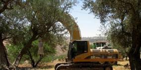 قوات الاحتلال تجرف 50 دونما من أراضي الخليل