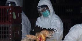 الصين تعدم 17 ألف طير من الدواجن بسبب إنفلونزا الطيور