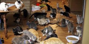 امرأة عاشت في بيتها مع 130 قطة