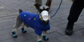 هونغ كونغ: كلب في الحجر الصحي