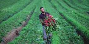 """فرصة """"كورونا"""" (2) الزراعة"""