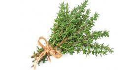 فوائد الزعتر الأخضر..تعرف عليها