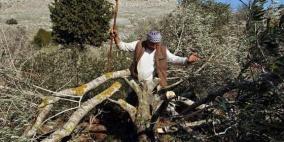مستوطنون يقتلعون المئات من أشتال الكرمة جنوب بيت لحم